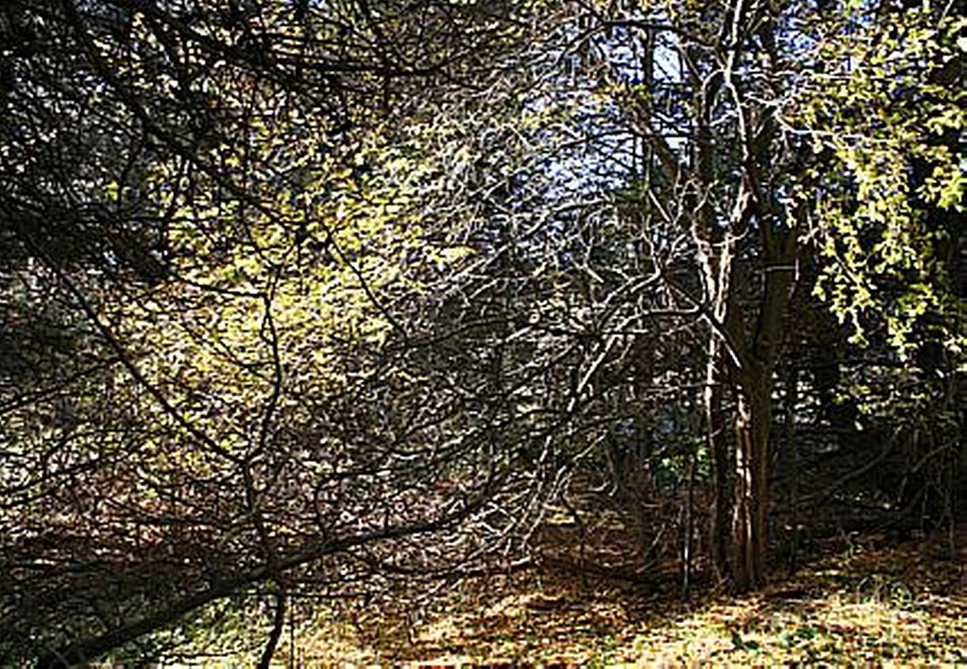 Fritidsgrund på Skovspurvevej i Jægerspris - Grund