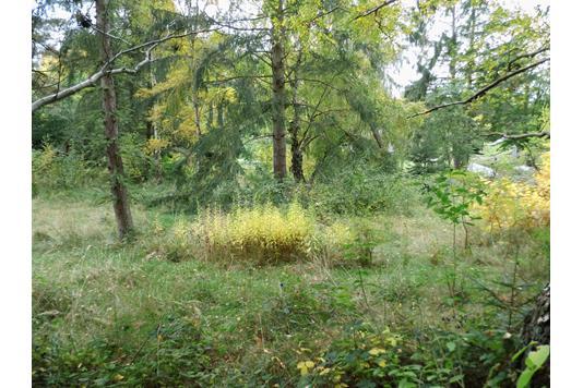 Fritidsgrund på Nordskovhusvej i Jægerspris - Grund