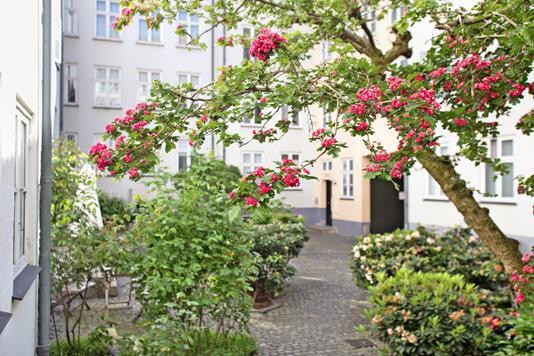 Ejerlejlighed på Laksegade i København K - Gårdmiljø